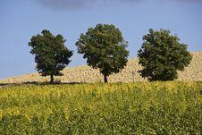Free Vineyards Stock Photography - 6681442