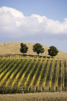 Free Vineyards Stock Image - 6681631