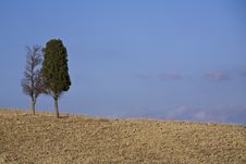 Free Cypress Tree On A Hill Top Stock Image - 6681801