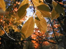 Free Autumn Colors Royalty Free Stock Image - 6681806