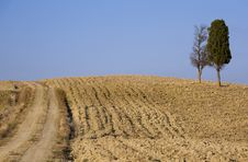 Free Cypress Tree On A Hill Top Stock Image - 6681841