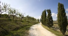 Free Tuscan Landscape, Cypress Royalty Free Stock Photo - 6682605