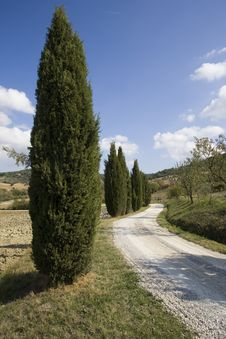 Free Tuscan Landscape, Cypress Royalty Free Stock Image - 6682616