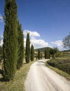 Free Tuscan Landscape, Cypress Stock Images - 6682654