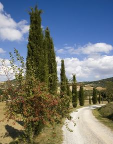 Free Tuscan Landscape, Cypress Royalty Free Stock Image - 6682666