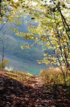 Free Mellow Autumn Royalty Free Stock Photography - 6682897