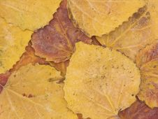 Background From Autumn Leaves Stock Photos