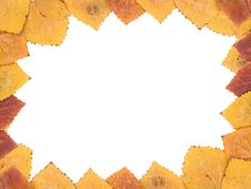 Free Frame From Autumn Leaves Royalty Free Stock Images - 6683279