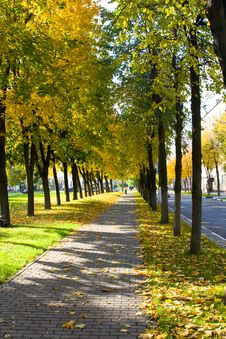 Free Avenue Among Trees Royalty Free Stock Photos - 6684668