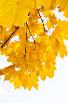 Free Autumn Stock Images - 6684764