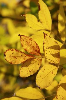 Free Yellow Leave Stock Photography - 6685372