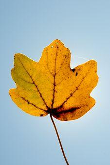 Free Leaf Royalty Free Stock Photos - 6685688
