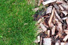 Free Green Grass And Bark Royalty Free Stock Photography - 6685787