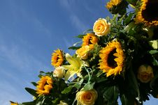 Sunflowers Against The Sky Stock Images