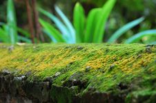 Moss On Wall Royalty Free Stock Images