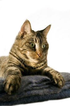 Free Staring Cat Royalty Free Stock Image - 6687706