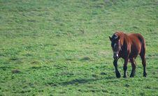 Free Horse Royalty Free Stock Image - 6688386