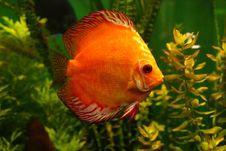 Free Fish Royalty Free Stock Photos - 6689108