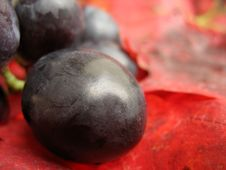 Free Red Grape Stock Photos - 6689133