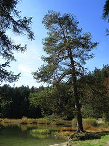 Free Beautiful Lake In Tirol Royalty Free Stock Photography - 6689457