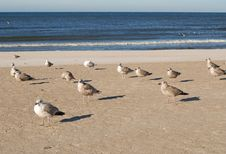 Free Sea Gulls Stock Images - 6689584