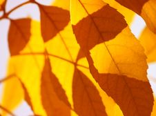 Free Yellow Leaves Stock Images - 6689684