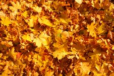Free Fallen Leaves Stock Photography - 6689692