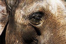 Free Elefants Eye Royalty Free Stock Images - 6689929