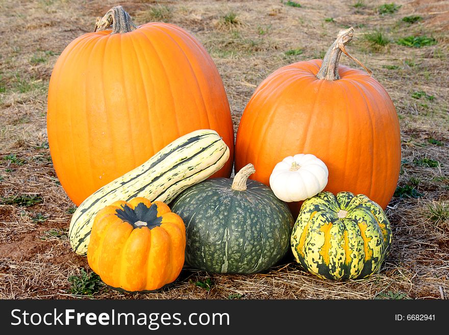 Pumpkins and squash in field