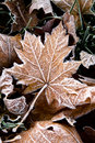 Free Fallen Leaf Royalty Free Stock Photos - 6690958