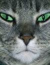 Free Intense Stare Royalty Free Stock Image - 6692246