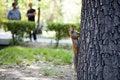 Free Squirrel Royalty Free Stock Photos - 6698208