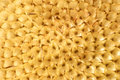 Free Mesh In A Sunflower Stock Image - 6698871