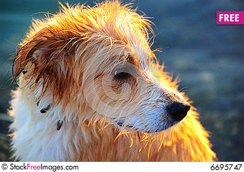 Free Wet Dog Royalty Free Stock Photography - 6695747
