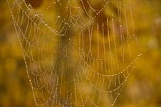 Free Dewy Spiderweb Royalty Free Stock Photo - 6690645