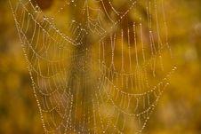 Free Dewy Spiderweb Royalty Free Stock Photo - 6690645