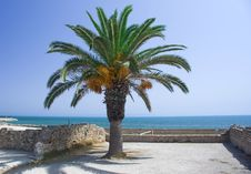 Free Palm On The Ruin Coast Sea Royalty Free Stock Photography - 6690797