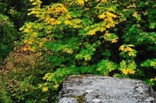 Free Rock And Leaves Royalty Free Stock Image - 6690806