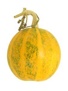 Free Pumpkin Stock Photo - 6690930