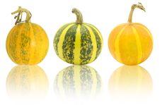 Free Pumpkin Stock Photo - 6690940
