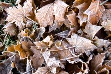 Free Morning Frost Royalty Free Stock Images - 6690969