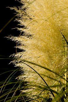 Free Long Grass Stock Photo - 6691030
