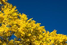 Free Bright Autumn Colors Royalty Free Stock Photography - 6691037