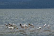 Free African Bird Life Stock Images - 6691044