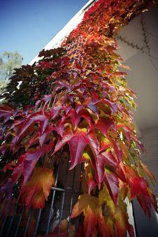 Free Autumn Stock Image - 6691721