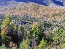 Mountain Foliage Stock Photo