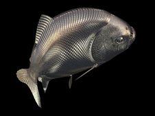 Free Gold Fish Stock Image - 6692201