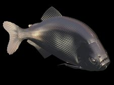 Free Gold Fish Royalty Free Stock Photos - 6692238
