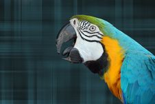 Free Parrot On Plaid Stock Photo - 6692370