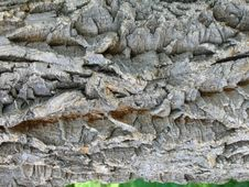 Free Bark Texture Stock Photos - 6692683